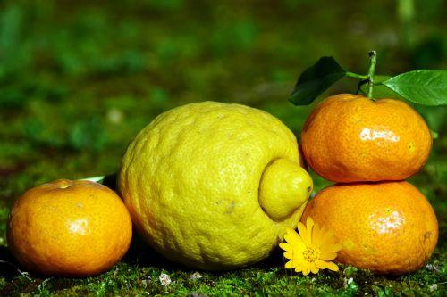 Citrusiniai vaisiai,citrina,mandarinas,sveikas,vitaminai,gamta,mityba,frisch,vaisiai,vaisiai,valgyti,maistas,tropiniai vaisiai