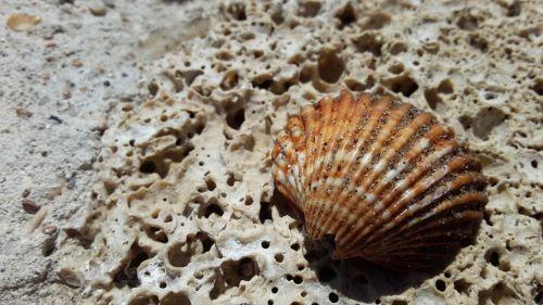 clam,akmuo,akmenys,puiku
