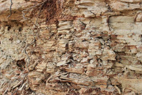 molis,grūdai,tekstūra