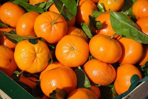 klementinos,vaisiai,vitaminai,klementinas,citrinos × aurantium,hibridas,citrusiniai,Citrusinis vaisius,mandarinas,citrusinių reticulata,oranžinė,citrusinių sinensis,sultingas,vaisių perkėlimas,pervedimas