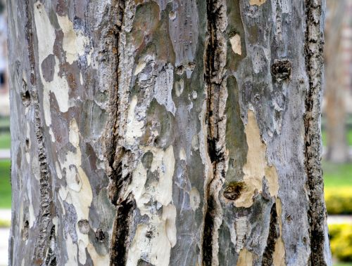 medis, medis & nbsp, bagažinė, bagažinė, mediena, ornate, dizainas, tekstūra, modelis, gamta, augalas, medžio kamieno arti
