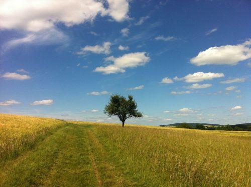 debesys,vasara,medis,takas,laukas,vidurinis reinas,rinas,Reino pilies takas,miško pakraščio takas,dangus,gamta,žygiai,kraštovaizdis