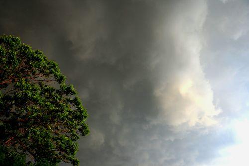 debesys,per naktį,audringas,balta,šviesa,medis,šviesus,šviesus,dangus