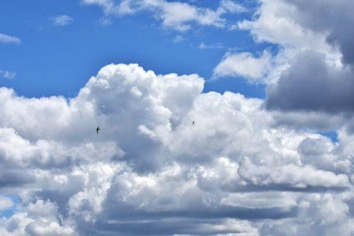 debesys,dangus,debesuotumas,gamta,dengtas dangus,mėlynas,lazdelės,paukščiai