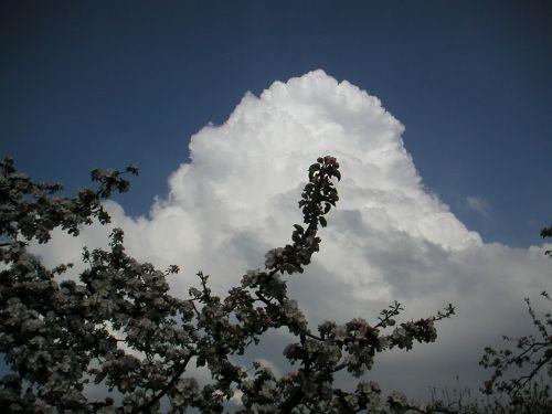 debesys,balta,cumulus cloud,cumulus,nuotaika,dangus,gražus,gamta,atmosfera,oras,oro temperamentas