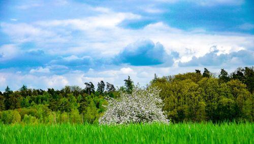 cloudscape,dramatiškas,dramatiškas dangus,nuotaika,atmosfera,tamsūs debesys,oro temperamentas,kraštovaizdis,ariamasis,laukas,Obuolių medis,žydėti,pavasaris,gamta