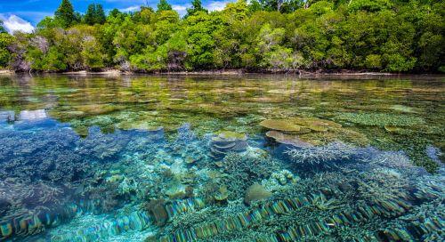 kranto,koraliniai rifai,skaidrumas,atogrąžų,Widi salos,halmahera salos,Indonezija
