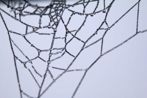 cob,voras,internetas,Iš arti