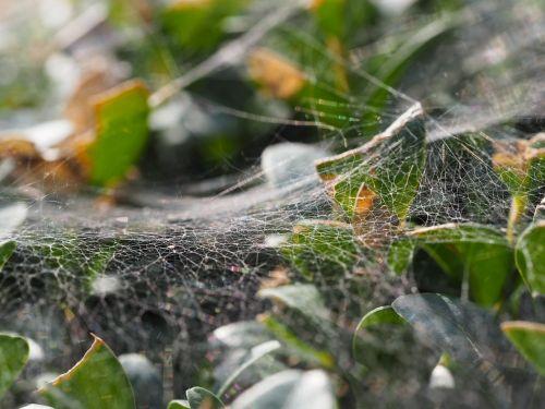 voratinklis,creepy,Halloween,aušros baimė,siaubingas,pasibjaurėjimas