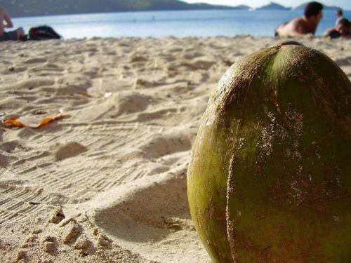 kokoso,Iš arti,smėlis,papludimys,vasara,smėlio paplūdimys nuostabus paplūdimys,šventasis martinas,sala