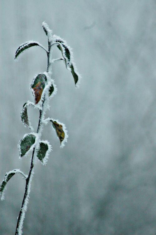 šaltas,šaltas oras,gamta,šaltis,sušaldyta,ledinis