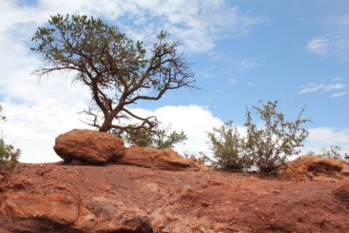 Colorado,kraštovaizdis,Rokas,gamta,lauke,akmuo,sodas dievų,Colorado spyruoklės