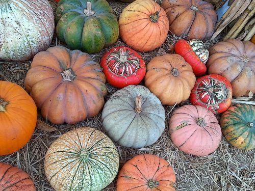 moliūgas, moliūgai, moliūgas, moliūgai, raudona, žalias, oranžinė, padėka, derlius, kritimas, ruduo, spalvos, spalvinga, maistas, daržovių, daržovės, spalvoti moliūgai ir moliūgai