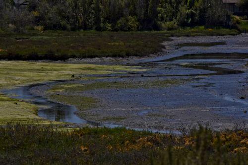 pelkė, kraštovaizdis, vaizdingas, Kalifornija, vanduo, birding, žalias, šventykla, spalvingos pelkės, Kalifornija