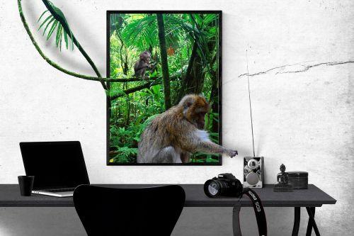 komponavimas,gamta,foto montavimas,skaitmeninių nuotraukų montavimas,giminingumas