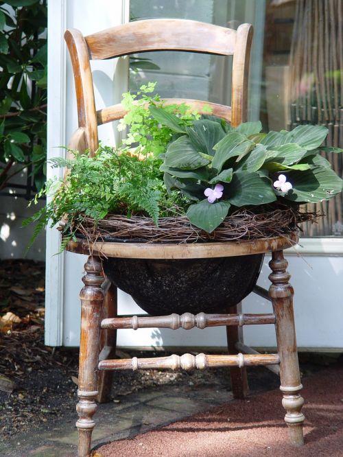 konteineris,augalas,sodininkystė,sodinti,sodininkystė,kompozicija,dizainas
