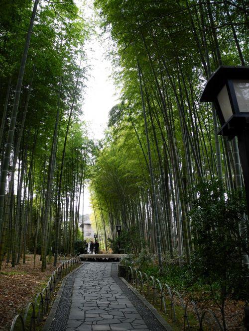 bambukas, shuzenji & nbsp, onsen, Japonija, kietas bambukas