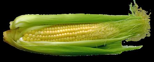 kukurūzai,cob,maistas,daržovės