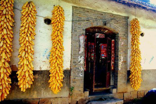 maistas, kukurūzai, kukurūzai, derlius, cob, kukurūzai & nbsp, cob, pakabinti, kabantis, džiovinimas, saugojimas, sezonas, Kinija, kukurūzų derlius