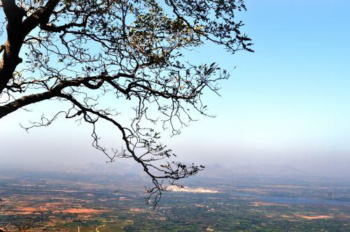 lapija, lapai, medis, gamta, filialai, žalias, kampinė lapija 10