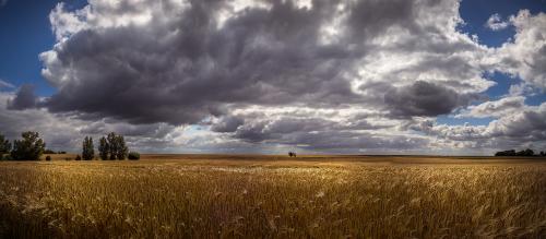kukurūzų laukas,grūdų lauko panorama,Insel luel,grūdai,debesys,vasara,sala,ausis,grūdai,dangus,laukas,kraštovaizdis,Žemdirbystė,rugių laukas,kvieciai,ariamasis,gamta,derlius,maistas,augalas,saulė,mėlynas,aukso geltona,vasaros dangus,valgyti,javai,kaimas,miškas,miltai,rugių laukas,šviesa,lengvas atvejis,duona,žinoma,mityba