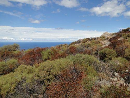 Korsika,macchia,horizontas