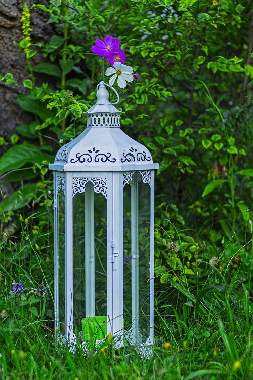 cosmea bipinnata,cosmea,žibintas,deko,apdaila,como bipinnatus,gėlė,kompozitai,žiedas,žydėti,augalas,kosmee,dekoratyvinis augalas,lankstinukas leved schmuckblume,gamta,asteraceae,vasara,balta,žydėti,pavasaris,kosmosas,dekoratyvinė gėlė,rožinė gėlė,žiedynas,violetinė,makro,šviesiai violetinė,sodas,schnittblume,gėlių pieva,išpjautas lapas,žvakė,žvakės,cosmea gėlė,krūmas,romantiškas,jaukus