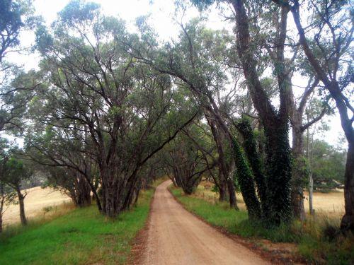 medžiai, kelias, purvinas & nbsp, kelias, bushland, kaimo keliukas