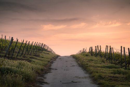 kaimas,pasėliai,aušra,dusk,žemės ūkio paskirties žemė,tvora,žolė,kraštovaizdis,šviesa,siauras kelias,lauke,kelias,kaimas,dangus,saulėlydis,augmenija,mediena