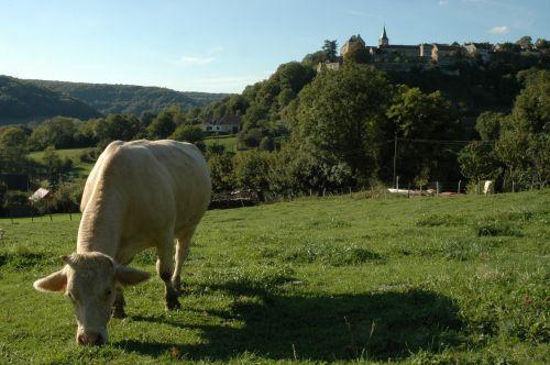 karvė,galvijai,ganykla,kraštovaizdis,pieva,kaimas,kalnas,gamta,slėnis,kaimas,Žemdirbystė,gyvūnas,vasara,karvės