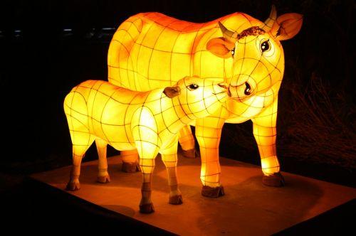 karvė,žibintų festivalis,Cheonggyecheon srautas,kkotdeung festivalis,izometrinis straipsnis
