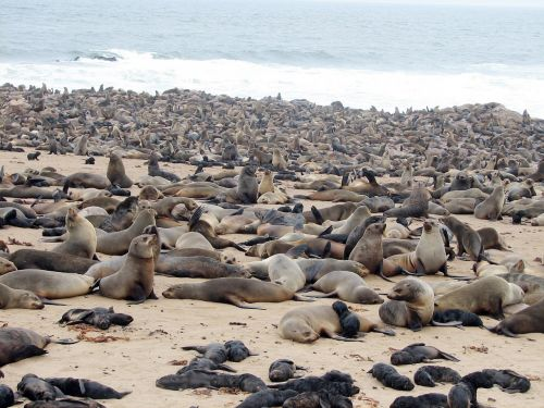 nuskaityti,Namibija,papludimys