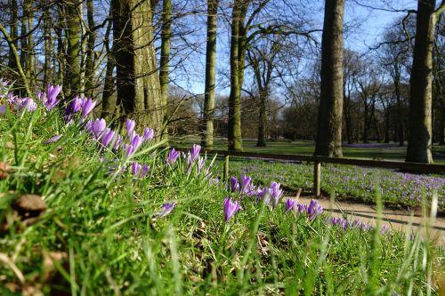 Crocus gėlė, husum, Crocus ziedo festivalis husum, pilies parkas, Crocus, be honoraro mokesčio