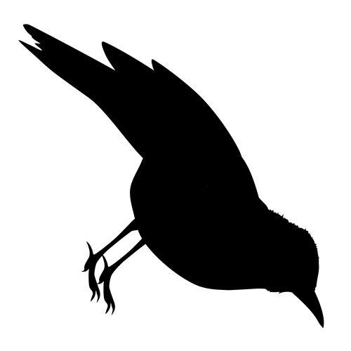gegutė, paukštis, izoliuotas, personažai, uodega, gyvūnai, plunksna, naminiai paukščiai, piešimas, juoda, dryžuotas, figūra, iliustracija, snapas, veidas, eskizas, atsekimas, stilius, siluetas, laukiniai, vaizdas, vienas, ilgis, animacinis filmas, skraidantis, niekas, Europa, amerikietis, ilga & nbsp, pasaka, pakartoti, gegutė siluetas