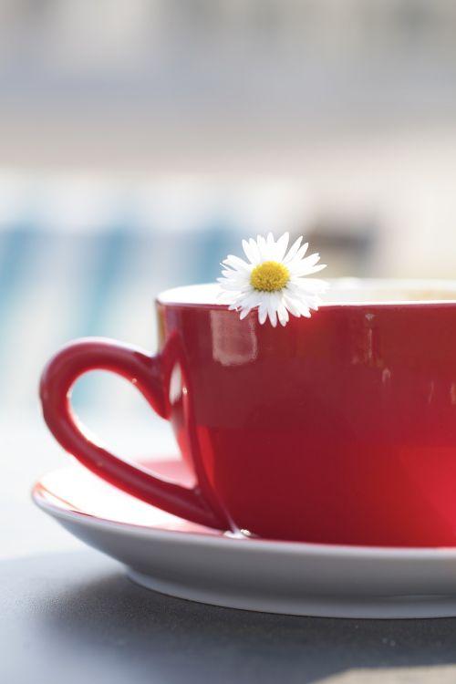 taurė,tee,margaritas,gėlė,kava,arbata,gerti,porcelianas,dekoruoti,arbatos metas,arbatos puodelis,karšta arbata,keramika,arbata,puodelis arbatos,arbatos metas,atsipalaiduoti,marguerite,tylus,jaukus,pertrauka,atsipalaidavimas,malonumas,indai,mėgautis
