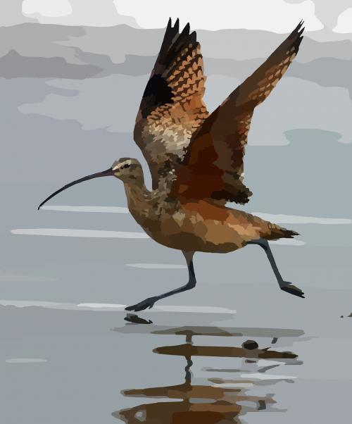 kreivas,paukštis,vanduo,bėgimas,sparnai,ilgai,sąskaitą,išlenktas,sąskaitą,akmens kreivas,ilgalaikiai mokėjimai,ornitologija,fauna,nemokama vektorinė grafika
