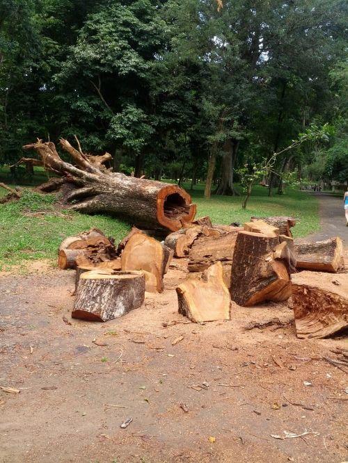 supjaustyti,medis,medinis,mediena,žurnalas,medienos ruoša,bagažinė,mediena,mediena,natūralus,gamta