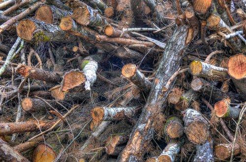 sumažinti, bagažinė, mediena, medis, rudi, miškas, modelis, ruduo, medienos, medienos, malkas, polių, filialas