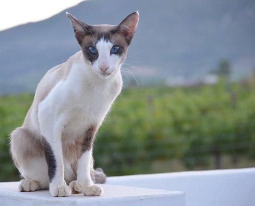 mielas, gyvūnas, katė, sėdėti, glamonėti