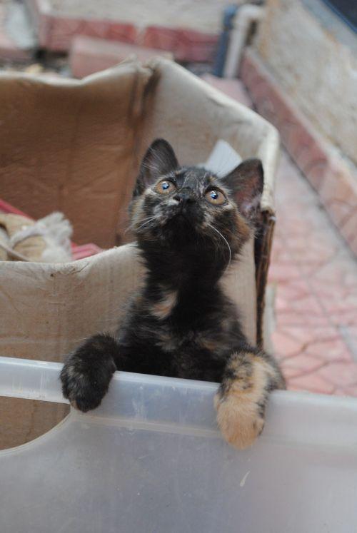 mielas kačiukas, kačiukas ieško, mielas, kačiukas, katė, naminis gyvūnėlis, gyvūnas, kailis, kačių, kačiukas, žavinga