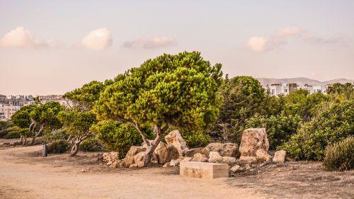 Kipras,paphos,karalių kapai,Archeologinis saitas,kraštovaizdis,medžiai,akmenys