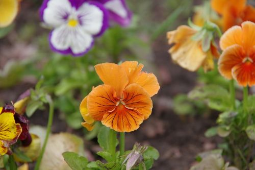 dacha,gėlės,vasara