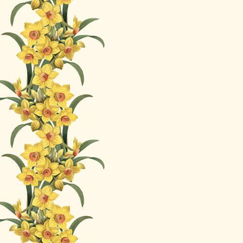 daffodil, pavasaris, gėlė, gėlių, botanikos & nbsp, iliustracija, botanikos & nbsp, spausdinimas, Scrapbooking, sodas, sodininkystė, Narcizo sienelė