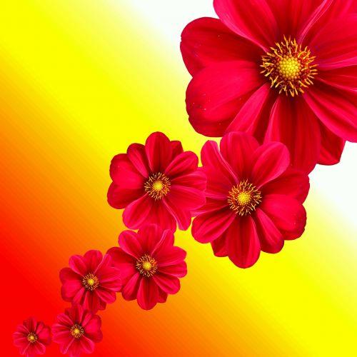 Dahlia, Augalas, Gėlė, Žiedas, Žydėti, Gamta, Sodas, Raudona, Sodo Augalas, Dahlia Sodas, Flora, Dizainas, Gėlių Ruduo, Gėlės, Dervos, Grafinė Flora