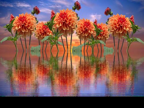 dervos,ruduo,dahlia sodas,dahlia,papuošalai dahlia,rudens delfinai,liepsna,gėlių sodas,sodas,žiedas,žydėti,dahlio gėlė,rudens gėlė,oranžinė,rudens spalvos