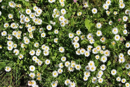 rozės,vasara,saulė,gamta,pavasaris,natūralus,lauke,lauke,žolė