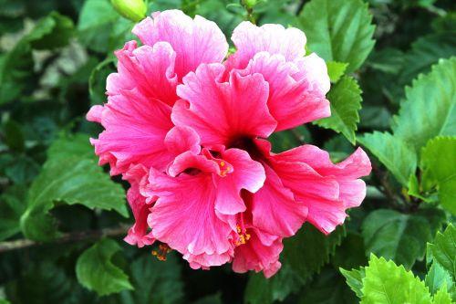 Daisy,gėlė,žydėjimas,augalas,pavasaris,vasara,žiedlapiai,flora,gamta,balta,geltona,Daisy ox,margarita common,Daisy-dog,margarita de luna,chrizantema