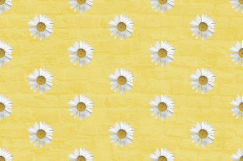 fonas, vaizdas, geltona, rozės, Daisy, gėlės, gėlių, tapetai, Daisy Daisy