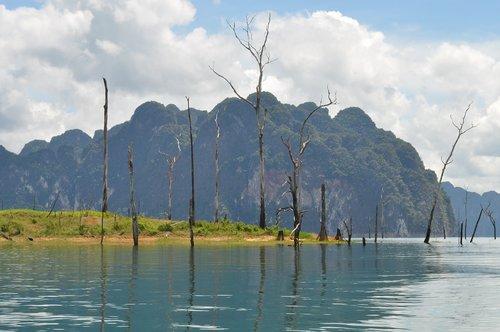 Dali, ežeras, medis