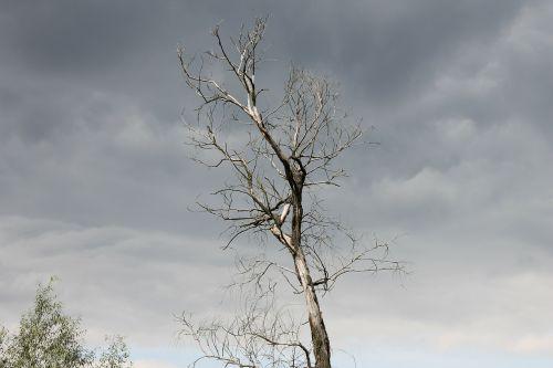 tamsi,medis,dangus,gamta,fonas,kraštovaizdis,vaizdas,debesys,medžiai,konar,po audros,žievė,medžių kamienus,konary,medžio žievė,žievė